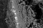 L'immagine di un'unghia di Pico della Mirandola vista con il microscopio elettronico a scansione; la traccia biancastra è la spia dell'esposizione all'arsenico (fonte: Università di Pisa)