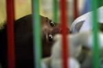 Aids: Msf, aziende farmaceutiche si dimenticano dei bambini