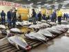 mercato del tonno in Giappone