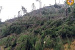 Maltempo: Alleanza Coop,480 milioni i danni per i produttori