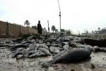 Oms, inquinamento Eufrate in Iraq causa la morte dei pesci