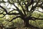 Giornata degli alberi, nuove piante in tutta Italia