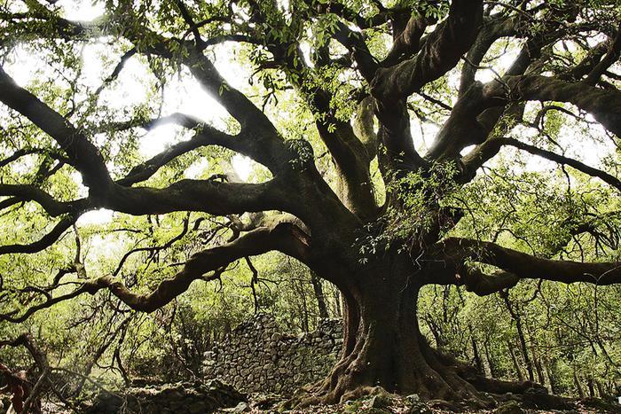 Vivaio Forestale Sicilia : Giornata degli alberi nuove piante in tutta italia giornale di