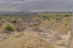 I cumuli costruiti dalla termiti sono alti 2,5 metri e larghi 9 (fonte: Roy Funch)