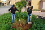 Verde pubblico a Cinisi: piantati alberi, cocus e ulivi in piazza Gramsci e via Fondo Orsa