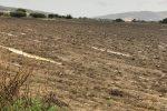 Maltempo a Licata, agricoltura in ginocchio: via al censimento dei danni