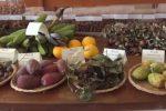 Agricoltura siciliana, a Palermo la fiera della Biodiversità: gli eventi della quarta edizione