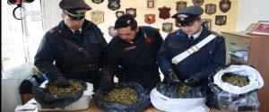 Otto chili di marijuana sotterrati in un terreno a Campobello di Mazara: 3 misure cautelari