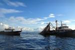 Pesca: Commissione Ue boccia piano Adriatico votato dal Pe