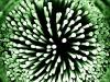 Batteri fotosintetici riescono a ottenere energia pulita dai liquami (fonte: Pixabay)