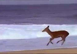 L'animale filmato sulla spiaggia non in Sardegna ma in Francia qualche anno fa