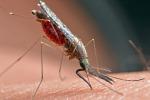Nuovo Rapporto mondiale sulla malattia