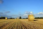 Diversificare le colture per far bene all'ambiente (fonte: Pixabay)