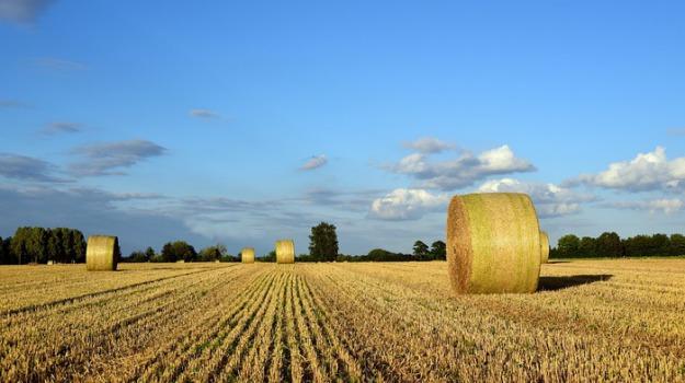 AGRICOLTURA, consorzi di bonifica, Agrigento, Economia