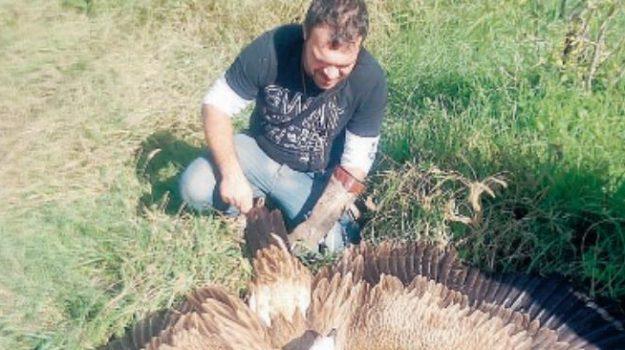 Grifone in difficoltà a Noto, salvato da un falconiere