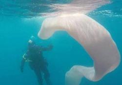 Misterioso mostro marino era al largo di White Island