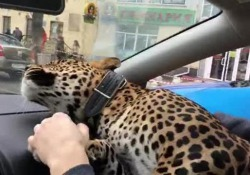 Il filmato girato da un tassista a Ekaterinburg