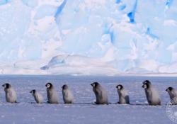 Questo filmato è stato girato in Antartide orientale
