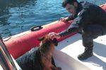 Salvato in mezzo al mare un cucciolo di pastore tedesco: il recupero a Porticello