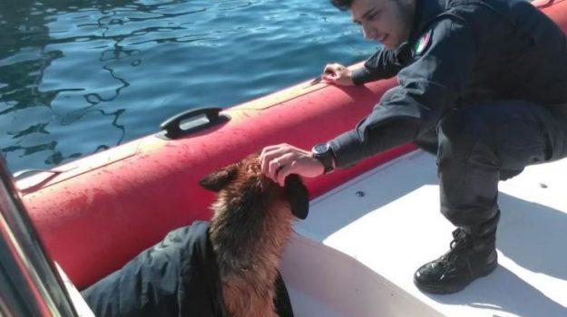 pastore tedesco in mezzo al mare, salvato pastore tedesco a porticello, Palermo, Cronaca