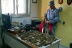 Ribera, denunciato un uomo che cacciava con strumenti non consentiti: sequestrati volatili