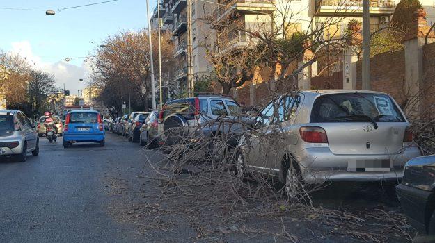 Maltempo, vento a palermo, Palermo, Cronaca