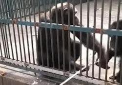 Il simpatico video catturato in uno zoo in Cina