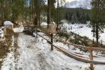 Maltempo: venerdì al Mise primo tavolo per recupero boschi