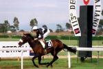 Ippica: gestore Capannelle, dal 2019 stop alle corse