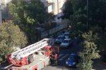 Catania, alberi pericolanti nel quartiere Borgo-Sanzio: i residenti chiedono interventi urgenti