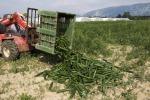 Agroalimentare, accordo Ue su pratiche commerciali sleali