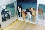 Brasile, un senzatetto finisce in ospedale e i suoi quattro cani lo aspettano per ore