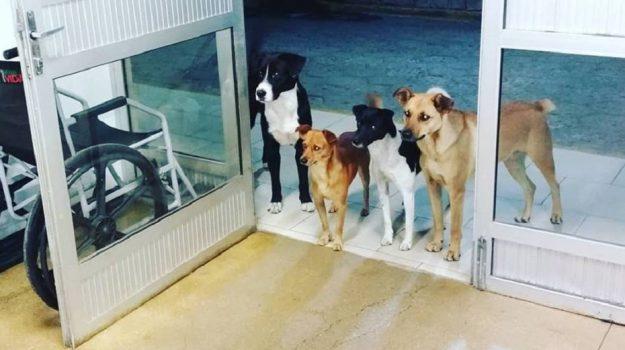 cani brasile, senzatetto ospedale cani, Sicilia, Mondo
