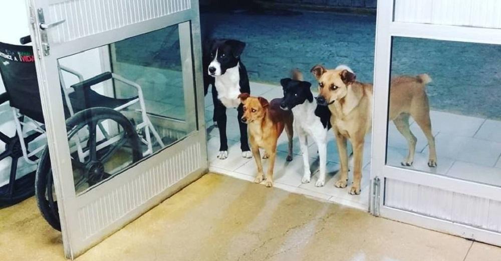 Senzatetto ricoverato in ospedale: i suoi cani lo aspettano fuori dalla porta