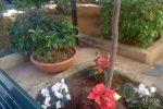 Stelle di Natale e addobbi, villetta Modugno a Palermo si veste a festa