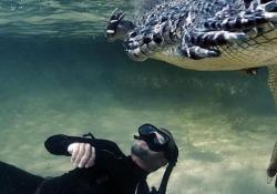Le affascinanti immagini subacquee al largo delle coste del Messico