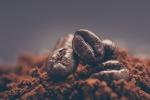 Il caffe', in grani e in polvere