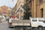 """Arriva l'albero a Caltanissetta, ma la polemica non si placa: """"Prevale il grigiore"""""""