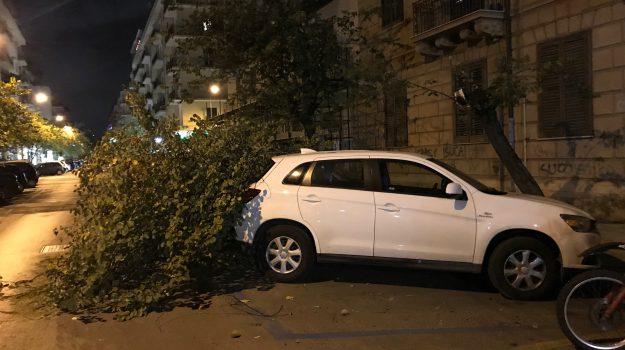 alberi caduti Palermo, maltempo palermo, vento palermo, Palermo, Cronaca
