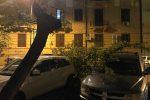 Forte vento, le foto degli alberi caduti a Palermo