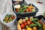 Giornata del suolo: Slow Food, terreni sani per cibo sano