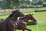 Corsa di cavalli clandestina a Caltanissetta, sette arresti