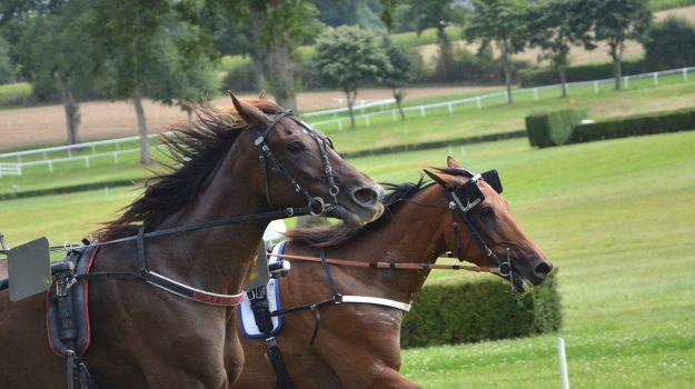 corse clandestine cavalli caltanissetta, Caltanissetta, Cronaca