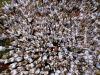 Il più grande raduno di persone con i capelli rossi, avvenuto nel 2007 ijn Olanda (fonte: Bart)