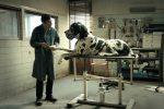 Oscar, l'Italia resta fuori dalla corsa per il miglior film straniero: scartato Dogman di Garrone