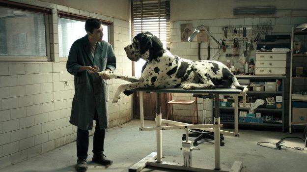 oscar 2019, oscar dogman film candidato, Luca Guadagnino, Matteo Garrone, Sicilia, Cultura