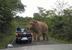 I visitatori nel Parco Nazionale Khao Yai, in Thailandia, possono arrivare molto, molto vicino agli elefanti