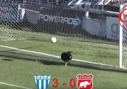 Durante una partita in Argentina