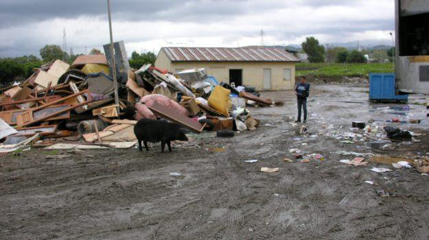 discarica abusiva milazzo, sequestro allevamento maiali, Messina, Cronaca