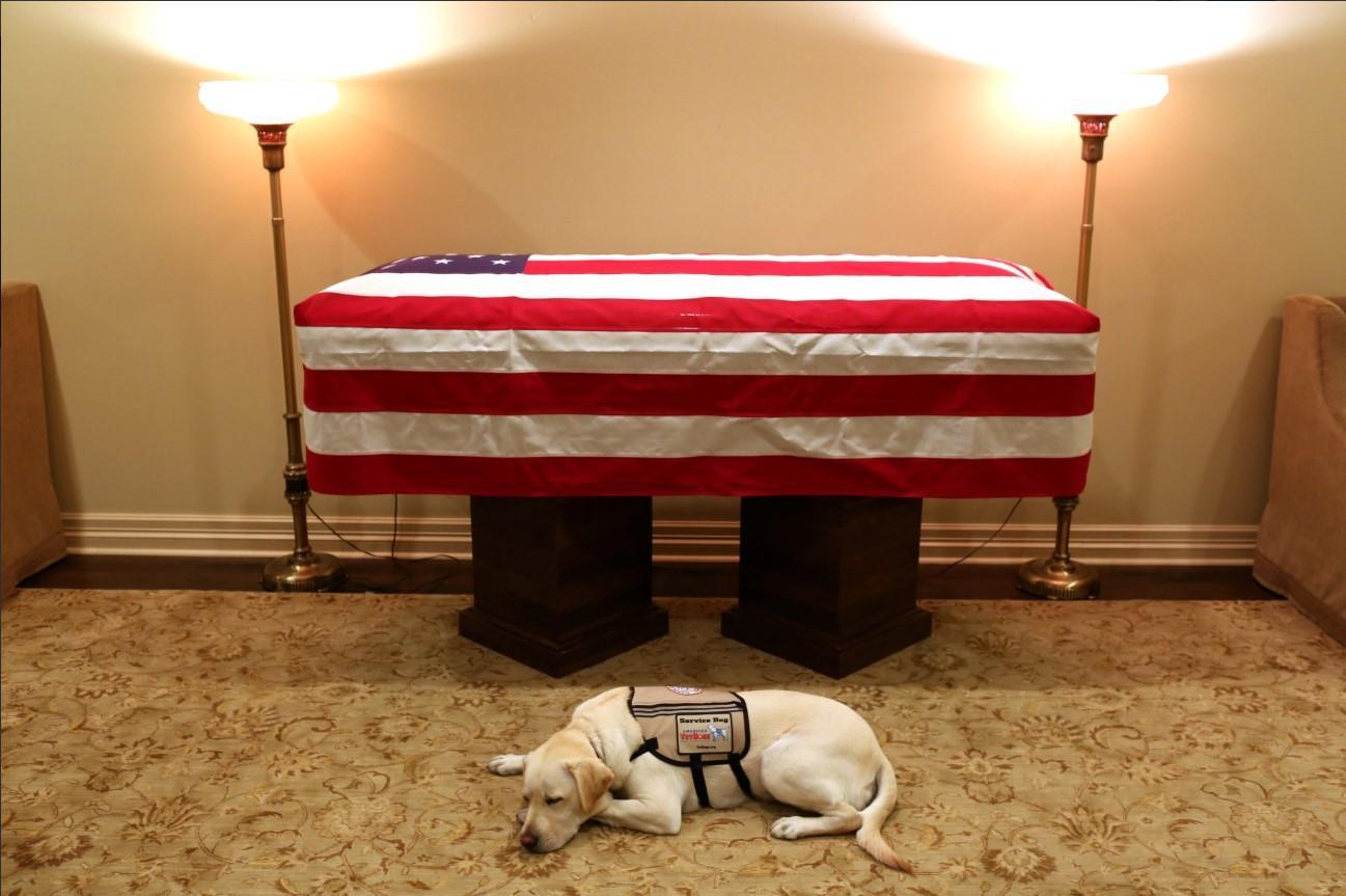 Sully, il cane di Bush, veglia ancora il suo presidente